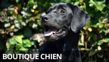 Canin d'oc